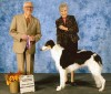 Coquetel Ode To Belskaya, Borzoi, 'Audrey' winning BB from classes. Breeder/owners: Julia & John Munro