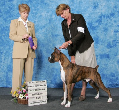 New Champion Ch shadowdale's Just In Time - Oct. 06 finished with a BPIG, 2 BB, & a Group 3rd